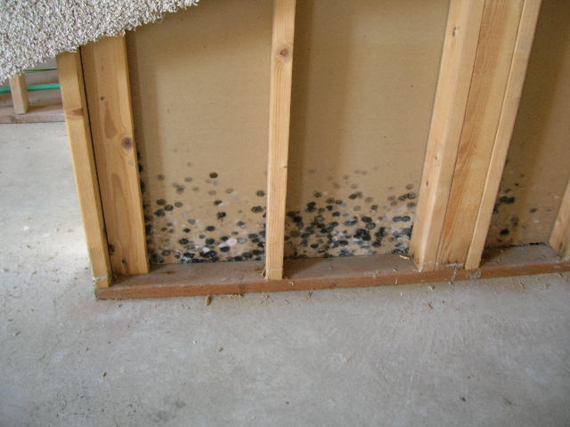 Mold It S No Fun Gus Indiana Home Inspection Company